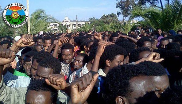 A peaceful protest demanding for an immediate halt to the disingenous Integrated Addis Ababa Development Master Plan quickly shaping itself into an ethnic Oromo student movement