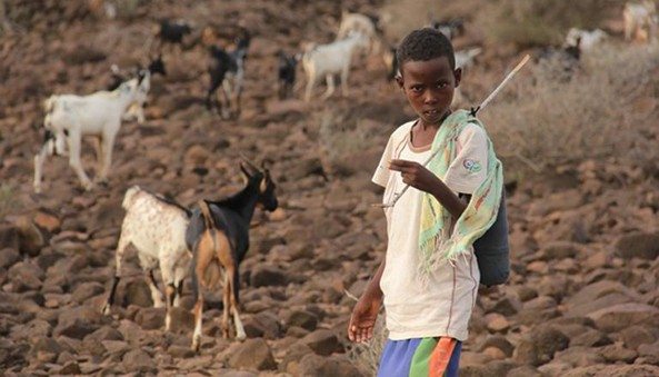 The UN says persistent and recurring droughts have resulted in general lack of water for both people and livestock and force 85 % of the total population to migrate to the capital