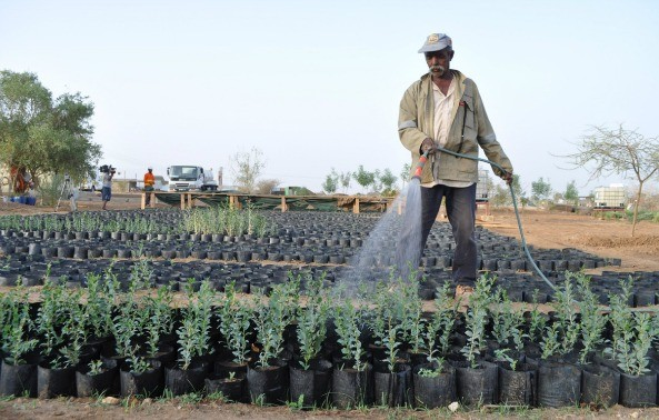 Eritrea, Through the Lens of Business Ethics and Sustainability (Audio)