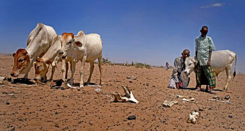 Hungry and Frightened: Famine in Ethiopia 2016