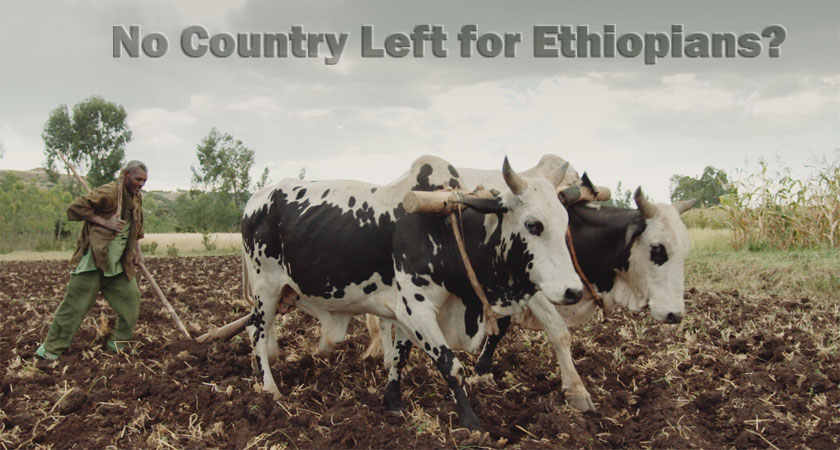 No country left for Ethiopians? TPLF is the new feudal land lord in Ethiopia.