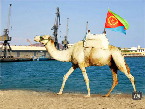 Eritrean ports for camels
