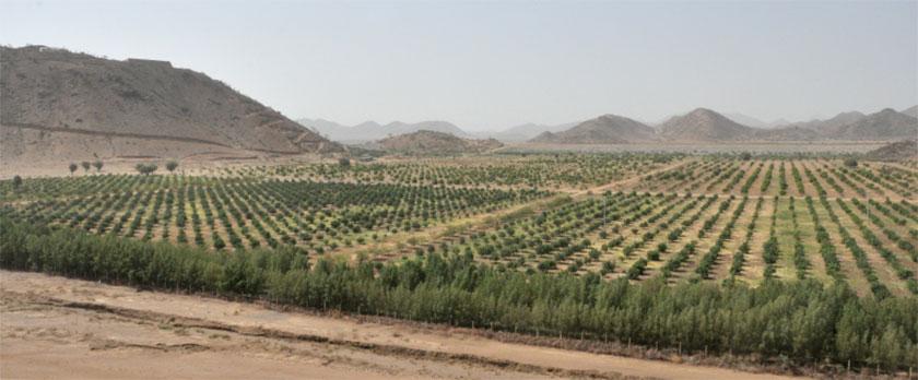 gerset-farm