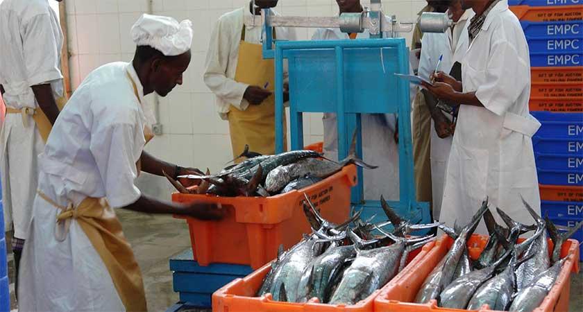 Eritrea fisheries sector - FReMP