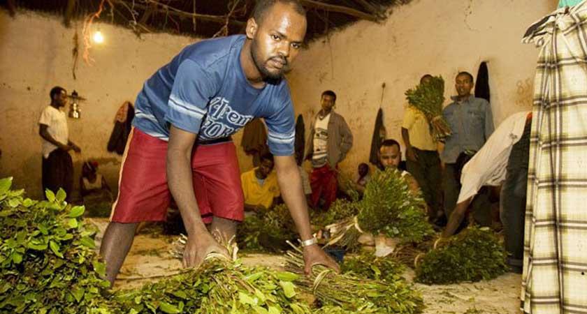 Khat boom in Ethiopia and Kenya