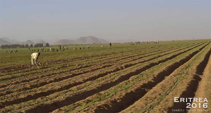 Eritrea food security policy