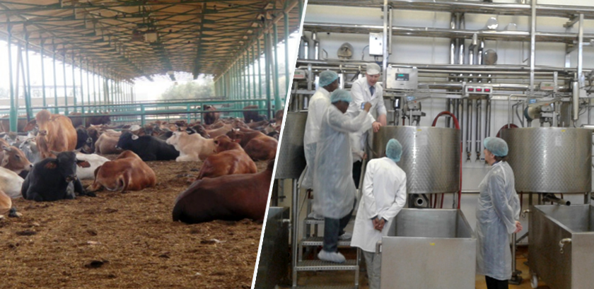 The Eritrean Crops and Livestock Corporation (ECLC) Progressing Production