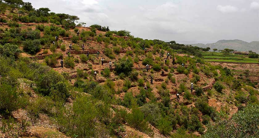 Ethiopia's Tigray Region Wins UN Gold Award for Greening its Drylands