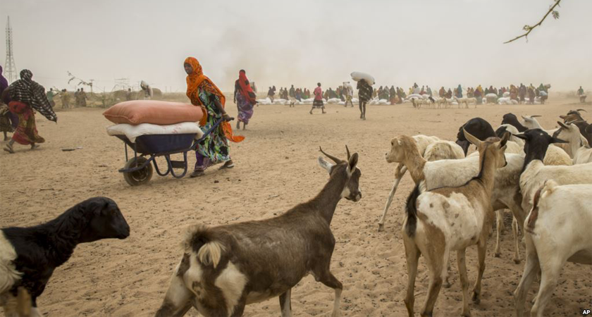 Ethiopia drought killings two million livestock
