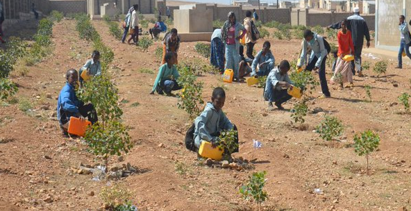 Student summer work program Eritrea