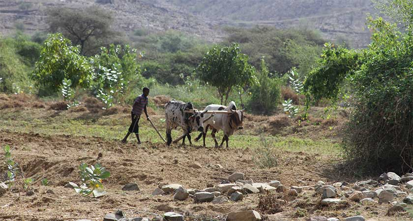 Eritrea: Sowing the Seeds of Sustainability