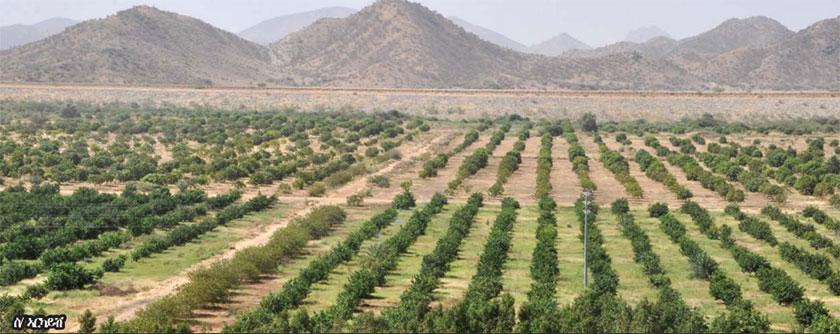 Modern irrigation farming technique