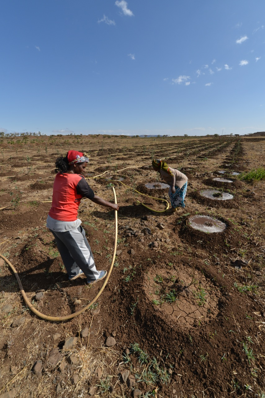 Solar pumps are used to irrigate farms Eritrea