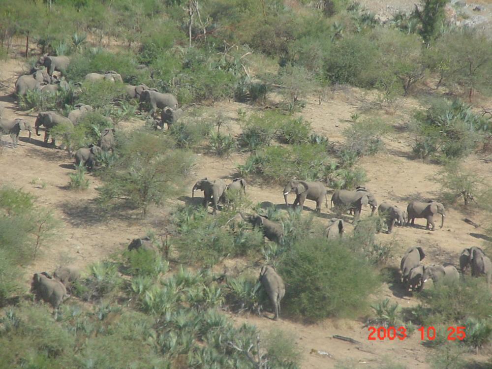 Elephant population in Gash Barka region of Eritrea