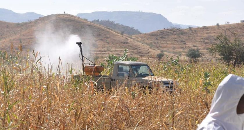 Eritrea in Key Control Operations Against Desert Locusts