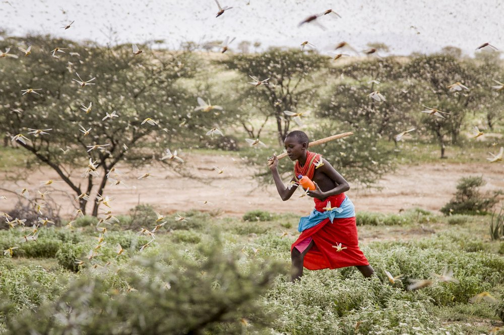 East Africa is facing the most serious Desert Locust outbreak in 25 years