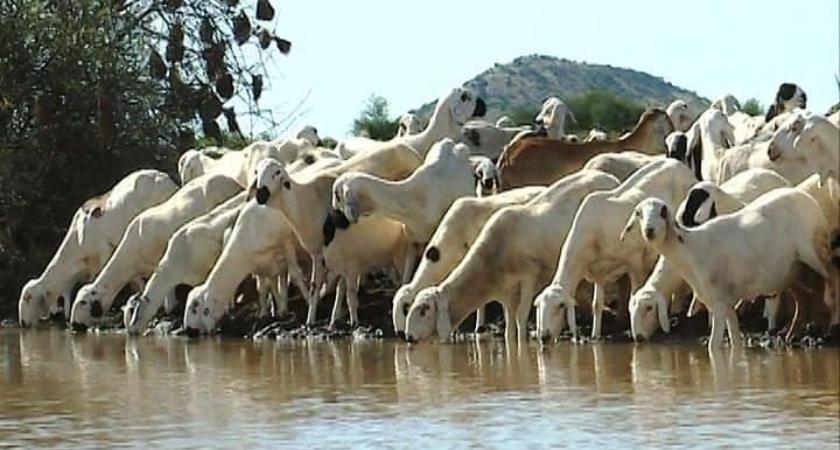 Gerset livestock rearing farm