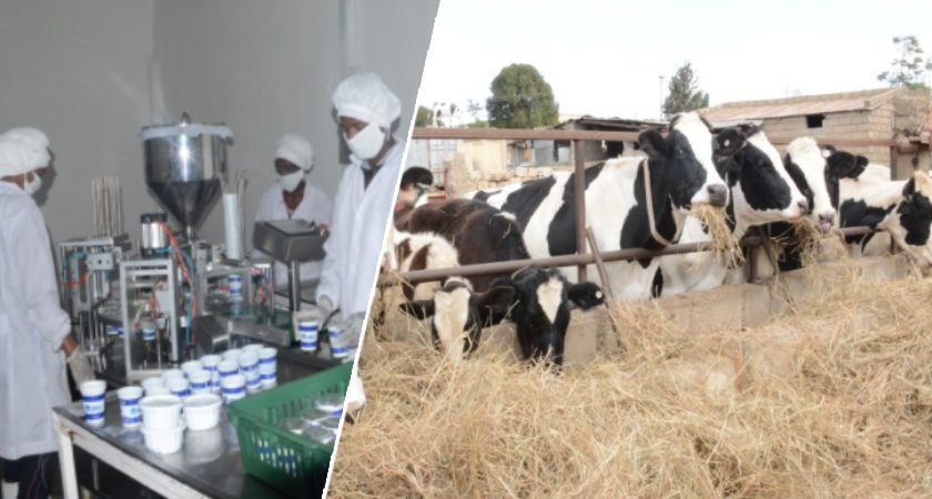 Eritrea: Zack Dairy Farm Products